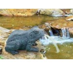 BERMUDA FROG – POND WATER SPITTER