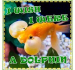 Children Book: I Wish I Were a Dolphin: A Story of Bubbles the Goldfish: Kids Photo Book (Ages 3-7) (Animal Fun Facts) (Bedtime Story)