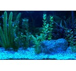 LED AQUARIUM STRIP LIGHTING SET in BLUE ** FULLY WATERPROOF KIT IDEAL FOR TRANSFORMING AQUARIUMS, FISH TANKS, PONDS, ETC **