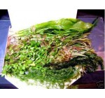 50 Live Aquarium Plants Collection Of Aquatic Plants For Your Fish Tank
