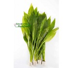 Amazon Sword Plants Echinodorus bleheri Live Aquarium Plants Aquatic Plants For Your Fish Tank (5)