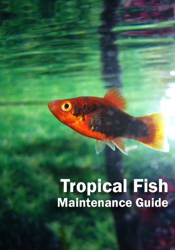 Tropical Fish: Maintenance Guide (Tropical Fish Guides)