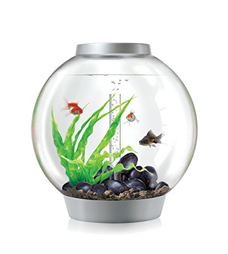Biorb Fish Tank 60 Aquarium Tropical Reviews