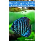 Freshwater Aquariums: How to Set Up One Like an Expert (Aquarium and Turtle Mastery)
