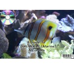 A CD GUIDE TO OWNING A SALT WATER (MARINE) AQUARIUM