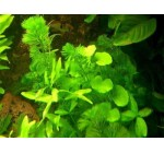 Anti algae set, 25 hydrophyte, 15 floating plants, fish tank Reviews